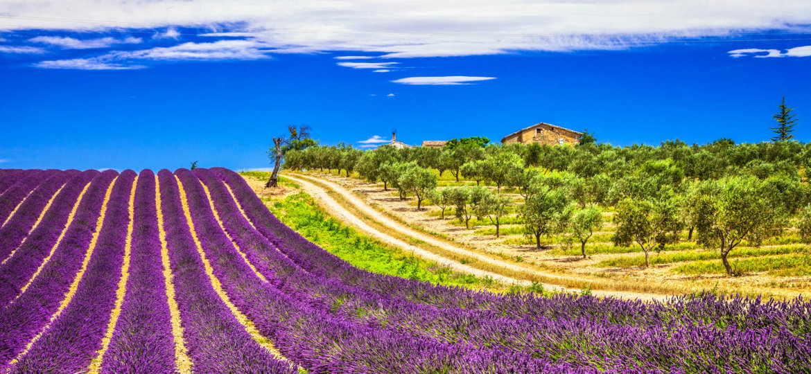 Lavande-in-Provence-Frankreich-iStock_000056878962_Large-2